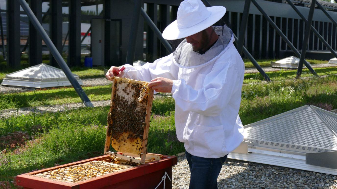 Imker mit Bienenstock bei elobau