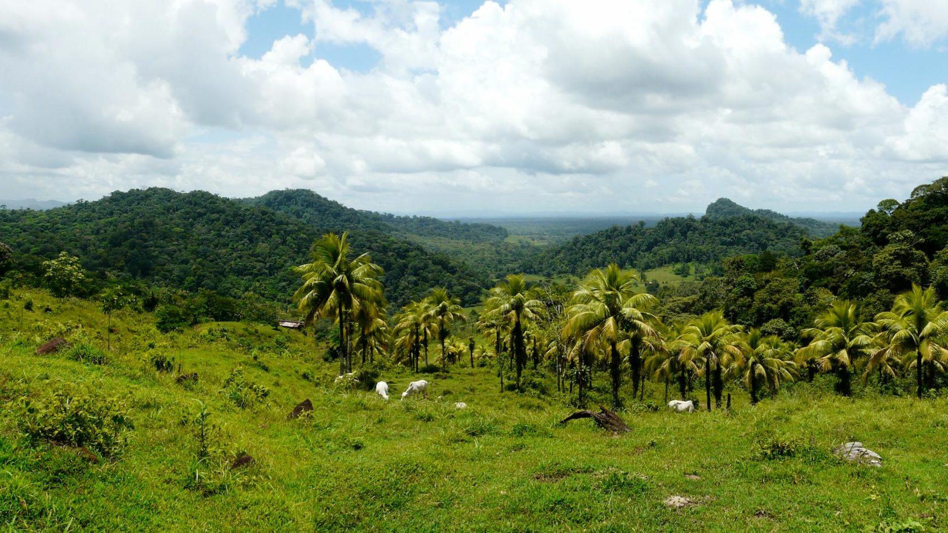 Visionswald in Costa Rica